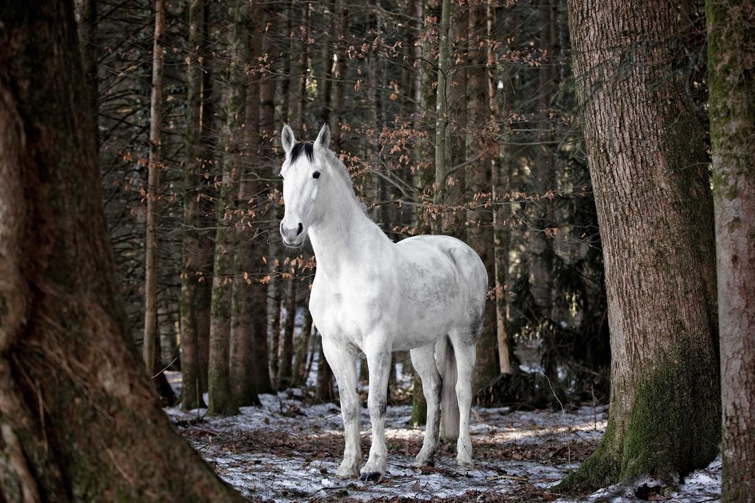 Fotograf Ravensburg, Pferdefotografie im Allgäu und Bodensee, Silke Monk, Fotografin aus Kisslegg.018