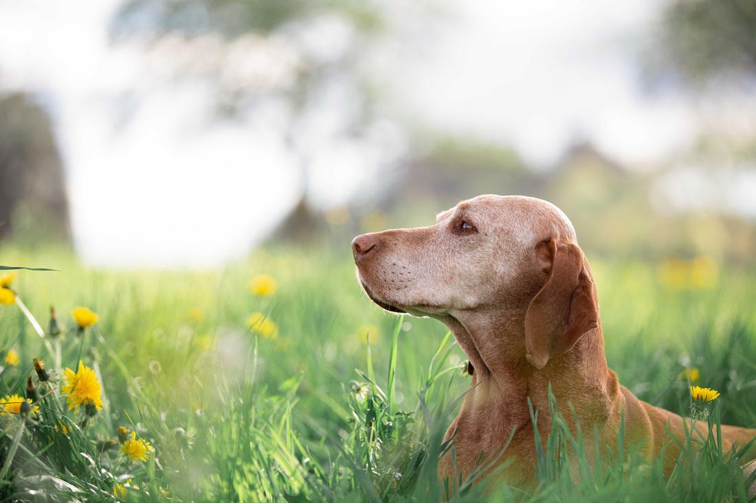 Hundefotograf, Fotograf Isny, Fotoshooting mit Hund.091