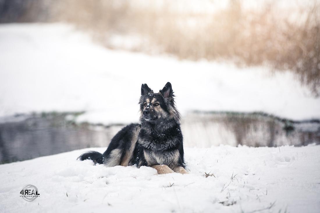 Fotograf,Tierfotograf,Ravensburg,Wangen im Allgäu, Tierfotografie,Hunde,Pferdefotografie,Kisslegg,Lindau,Bregenz-217